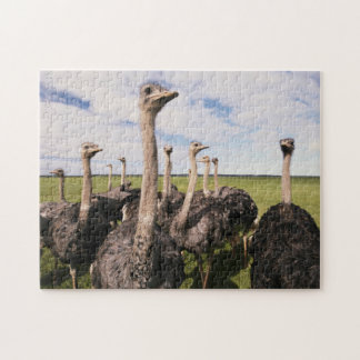 South Africa, View of ostrich Jigsaw Puzzle
