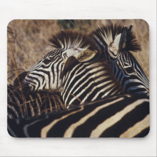 South Africa, View of Zebra (Equus Burchellii) Mouse Mat