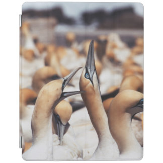 South Africa, Western Cape, High jinks iPad Cover