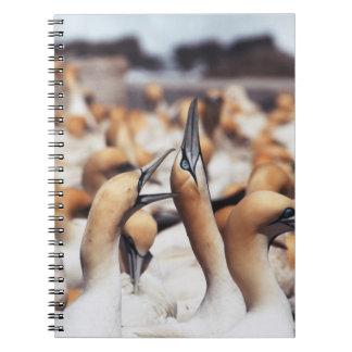 South Africa, Western Cape, High jinks Spiral Notebook