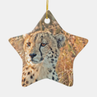 South African Cheetah searches for food Ceramic Star Decoration
