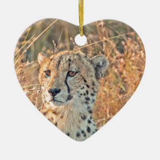 South African Cheetah searches for food Christmas Ornament