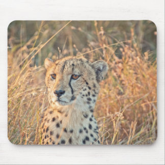 South African Cheetah searches for food Mouse Pad