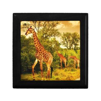 South African giraffes Gift Box