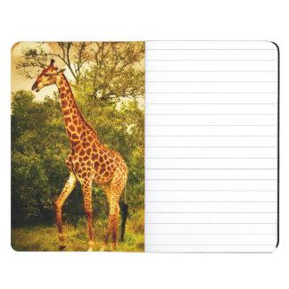 South African giraffes Journal