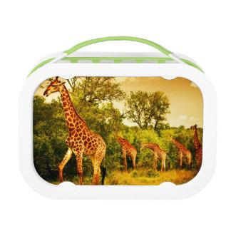South African giraffes Lunch Box