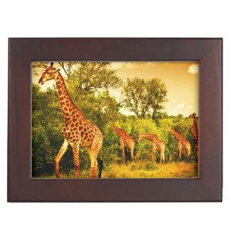 South African giraffes Memory Box