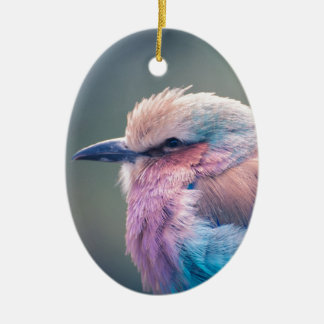 South African Lilac-Breasted Roller Ceramic Oval Decoration