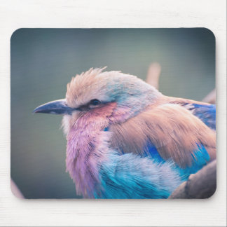 South African Lilac-Breasted Roller Mouse Pad