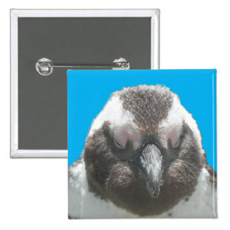 South African Penguin Face Button