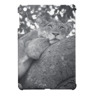 South African resting lion Case For The iPad Mini