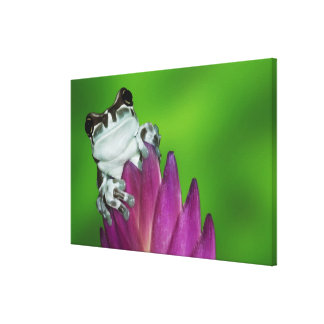 South America, Brazil, Amazon Basin. Close-up of 2 Canvas Print