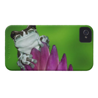 South America, Brazil, Amazon Basin. Close-up of 2 iPhone 4 Case-Mate Cases