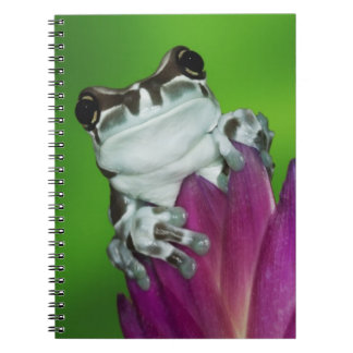 South America, Brazil, Amazon Basin. Close-up of 2 Spiral Notebook