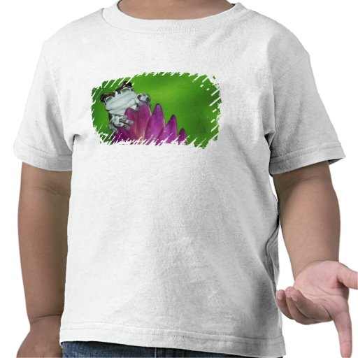 South America, Brazil, Amazon Basin. Close-up of 2 Tshirt