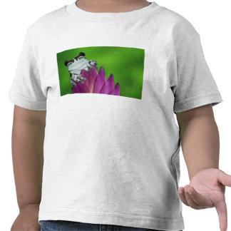 South America, Brazil, Amazon Basin. Close-up of 2 T-shirt