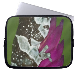 South America, Brazil, Amazon Basin. Close-up of Laptop Sleeves