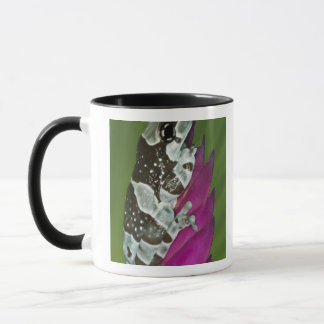 South America, Brazil, Amazon Basin. Close-up of Mug