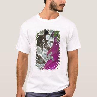 South America, Brazil, Amazon Basin. Close-up of T-Shirt