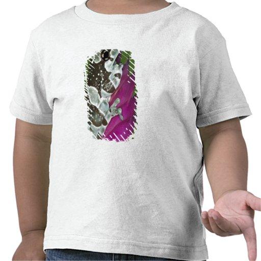 South America, Brazil, Amazon Basin. Close-up of T-shirts
