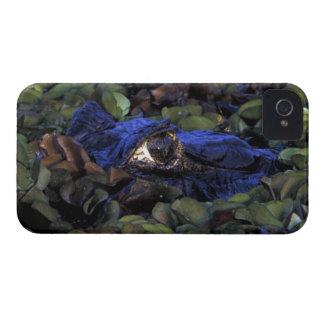 South America, Brazil, Amazon Rainforest, 2 iPhone 4 Cases
