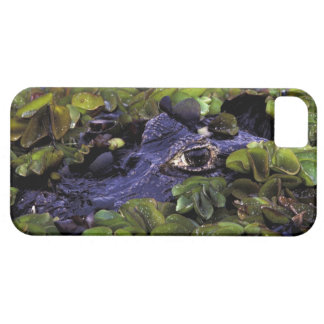 South America, Brazil, Amazon Rainforest, 3 Barely There iPhone 5 Case