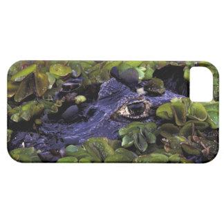 South America, Brazil, Amazon Rainforest, 3 iPhone 5 Case