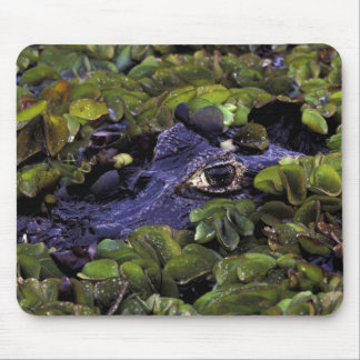 South America, Brazil, Amazon Rainforest, 3 Mouse Mat