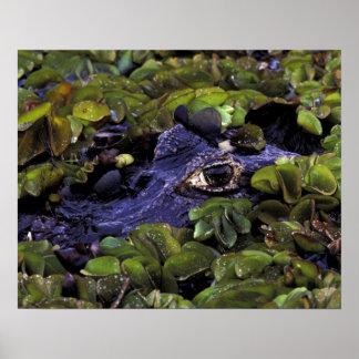 South America, Brazil, Amazon Rainforest, 3 Poster