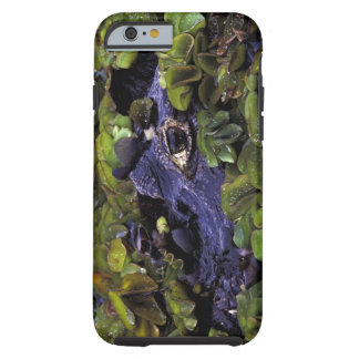 South America, Brazil, Amazon Rainforest, 3 Tough iPhone 6 Case
