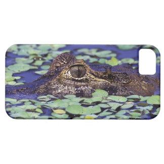 South America, Brazil, Amazon Rainforest, 4 iPhone 5 Case