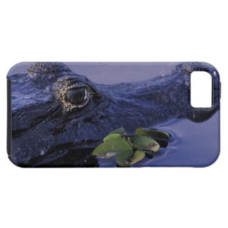 South America, Brazil, Amazon Rainforest, Case For The iPhone 5