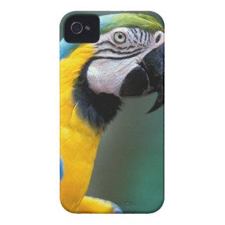 South America, Brazil, Iguacu Natioanl Park, iPhone 4 Case