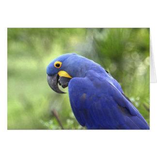 South America, Brazil, Pantanal. The endangered 2 Card