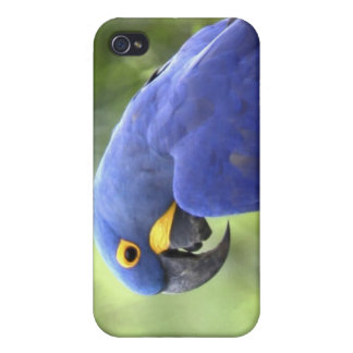 South America, Brazil, Pantanal. The endangered 2 iPhone 4 Case