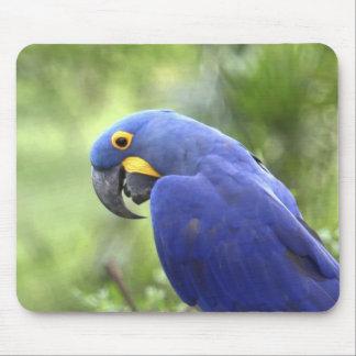 South America, Brazil, Pantanal. The endangered 2 Mouse Pad