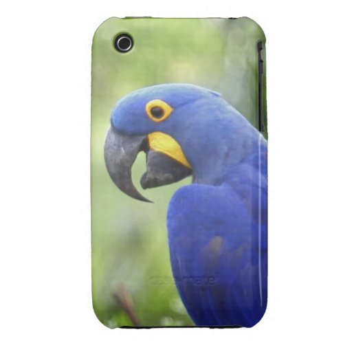 South America, Brazil, Pantanal. The endangered iPhone 3 Cover