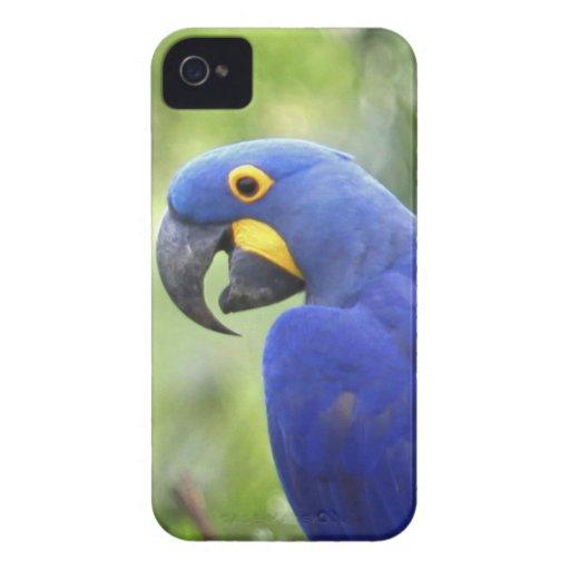 South America, Brazil, Pantanal. The endangered Blackberry Cases