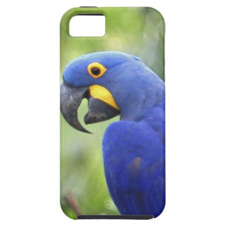 South America, Brazil, Pantanal. The endangered iPhone 5 Covers