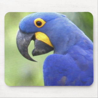 South America, Brazil, Pantanal. The endangered Mouse Mat