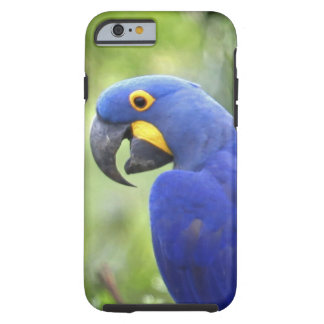 South America, Brazil, Pantanal. The endangered Tough iPhone 6 Case