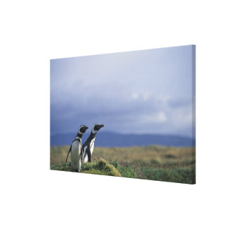 South America, Chile, Patagonia, Magellanes, 2 Canvas Print
