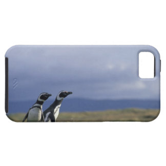 South America, Chile, Patagonia, Magellanes, 2 iPhone 5 Covers