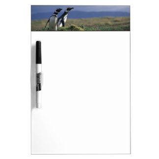 South America, Chile, Patagonia, Magellanes, 2 Dry Erase Whiteboards