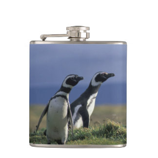 South America, Chile, Patagonia, Magellanes, 2 Flask
