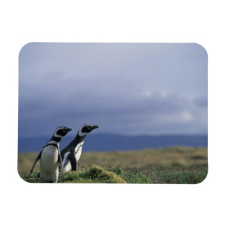 South America, Chile, Patagonia, Magellanes, 2 Magnet