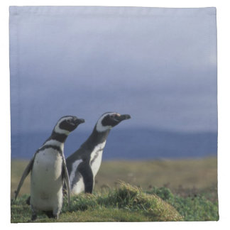 South America, Chile, Patagonia, Magellanes, 2 Napkin