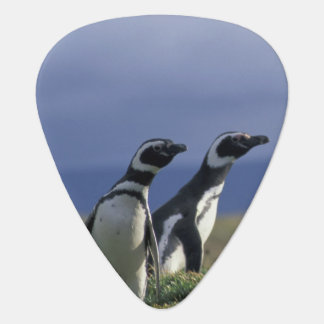 South America, Chile, Patagonia, Magellanes, 2 Plectrum