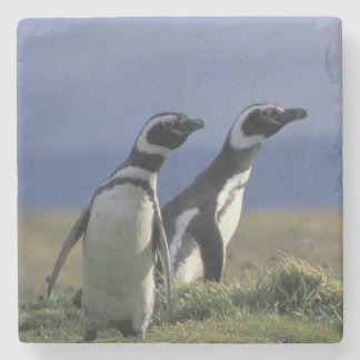 South America, Chile, Patagonia, Magellanes, 2 Stone Coaster