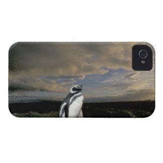 South America, Chile, Patagonia, Magellanes, iPhone 4 Case